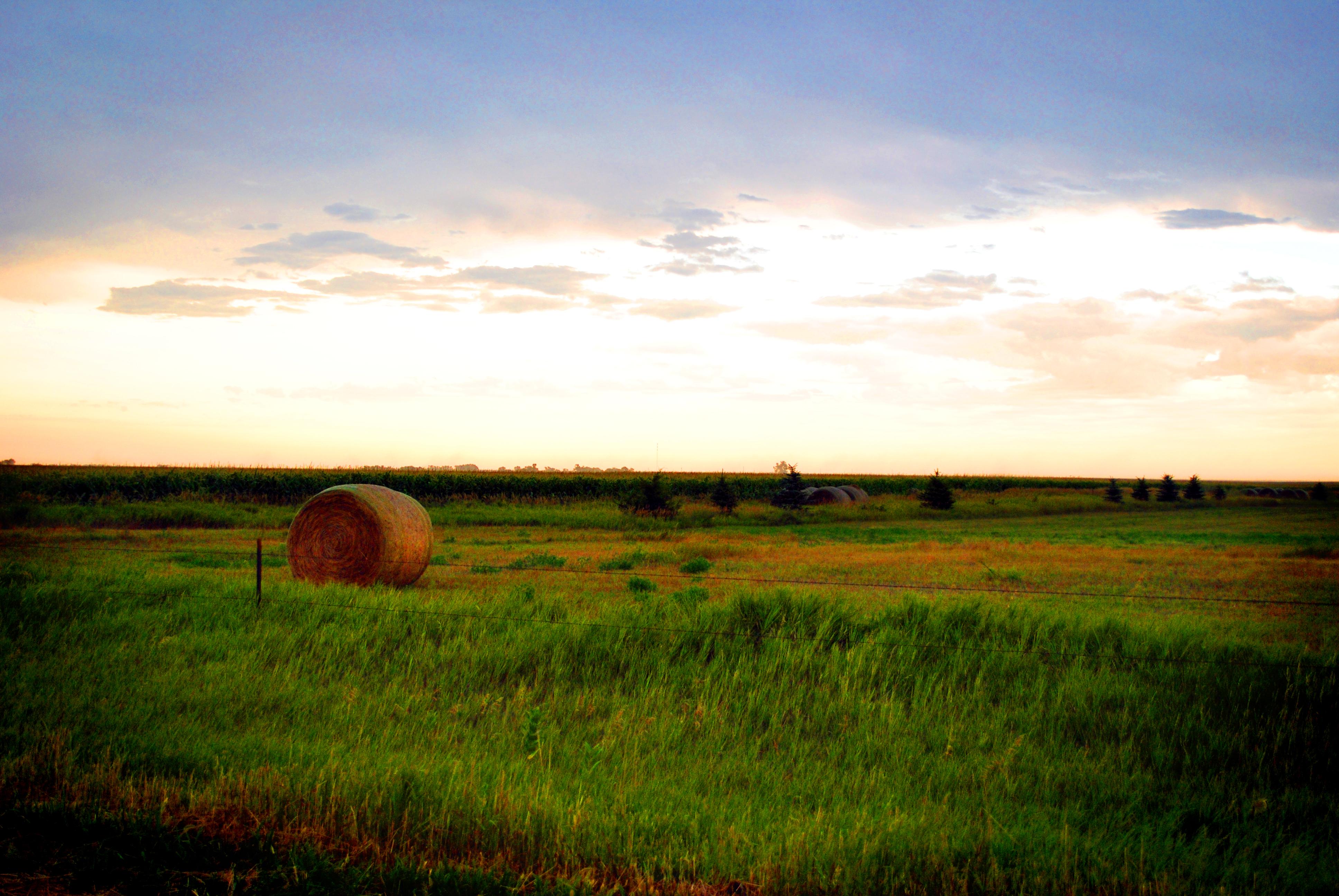Open Field Farm