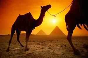Egypt Pyramids Camels Desert