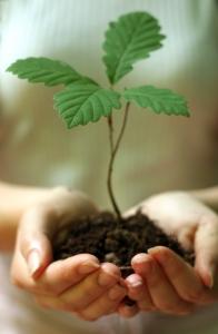 Planting trees sapling seeds